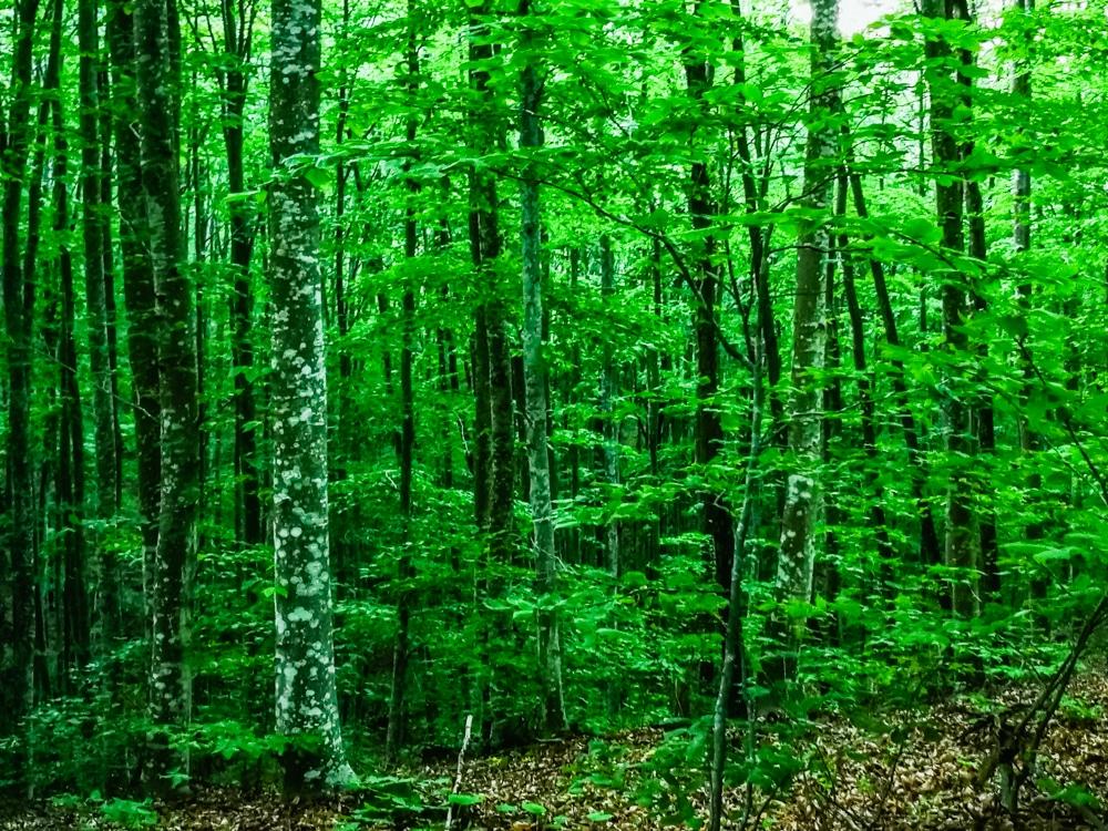 Седмицата на гората - 2020 1
